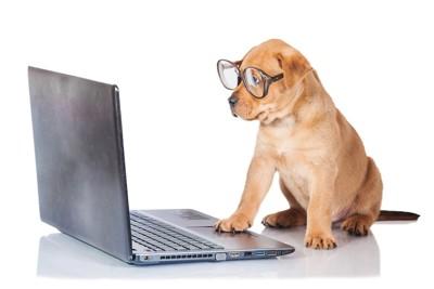 パソコンを見つめて仕事をしている犬