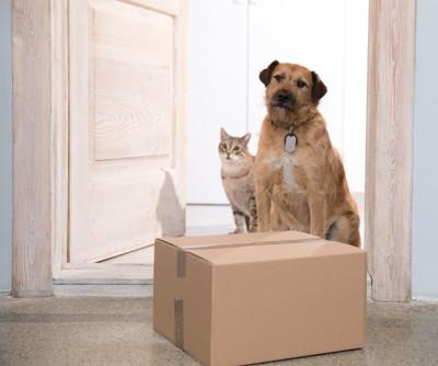 配達された荷物と犬と猫