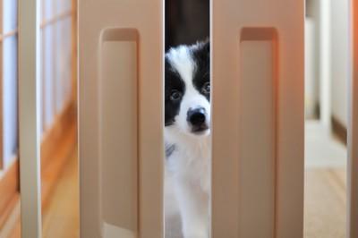 扉の隙間から顔を出している犬