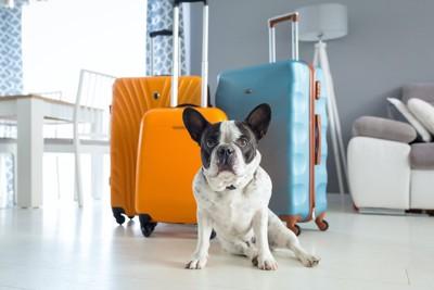 リビングに置かれたスーツケースの前に座る犬