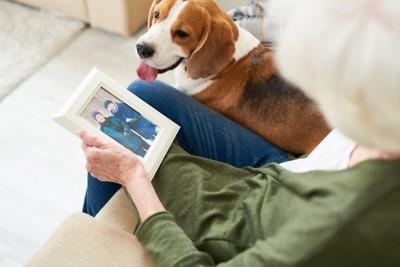 写真を見つめる老人と犬