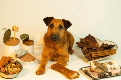 たくさんの食材に囲まれる犬