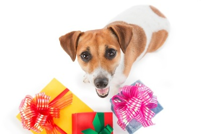 プレゼントの箱の前に座っている犬