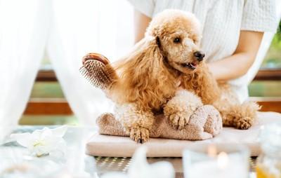台の上でマッサージされている犬