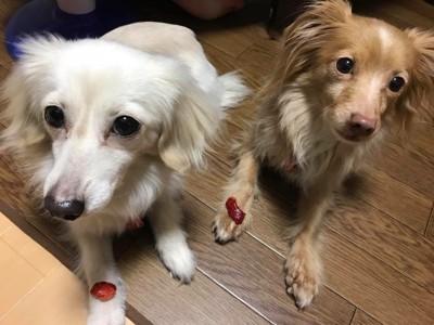 ミックス犬2匹