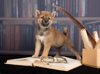 本の上に立つ犬