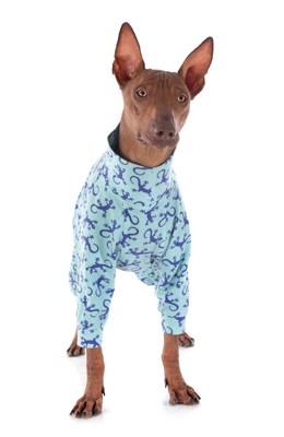 ロンパースを着た茶色い犬