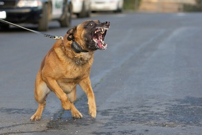 威嚇している犬