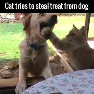犬の口に手を入れる猫