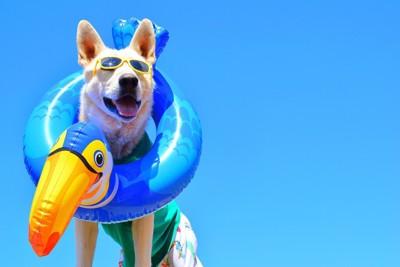 浮き輪と犬