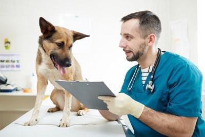 獣医師とシェパード