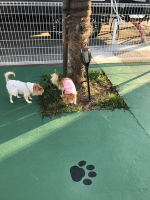 ドッグランで遊ぶ犬2匹