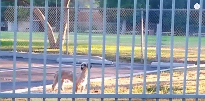 フェンス越しに見ている犬