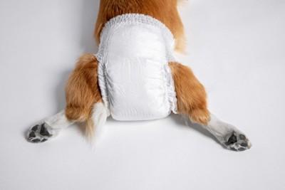 おむつをした犬のお尻のアップ