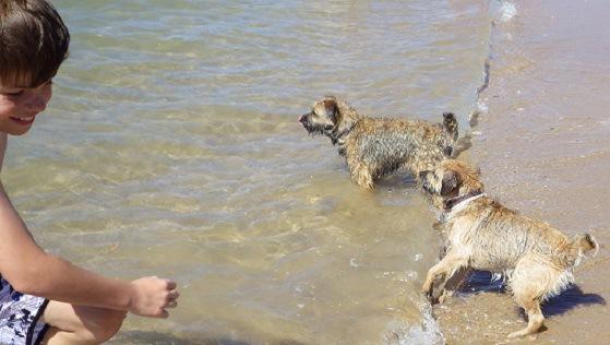 海で遊ぶ犬と子供