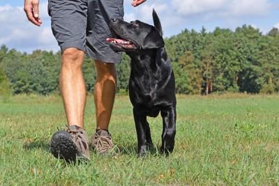 散歩する犬と飼い主