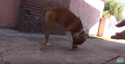 紙で遊ぶ犬