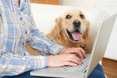 パソコン中の飼い主を呼びに来た犬