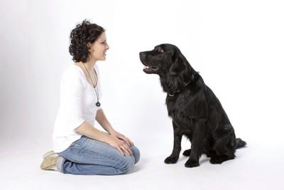 向かい合わせに座る犬と女性