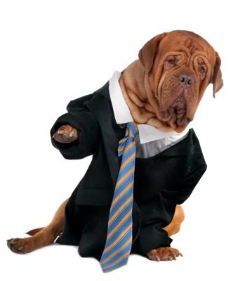 ヨレヨレのスーツを着ている犬