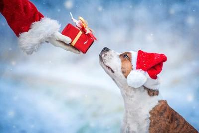 プレゼントを持つサンタの手と犬