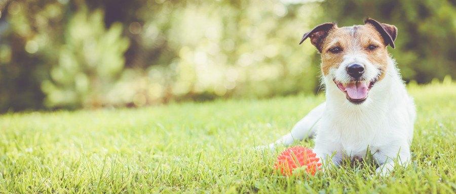 嬉しそうに笑う犬
