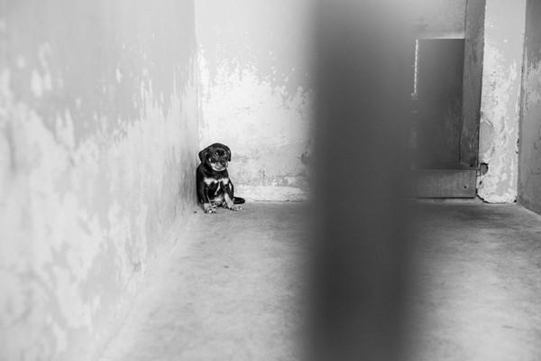 黒い小型犬