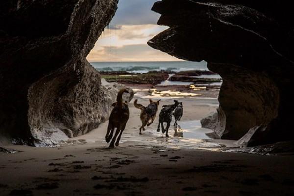 洞窟の中を走る犬