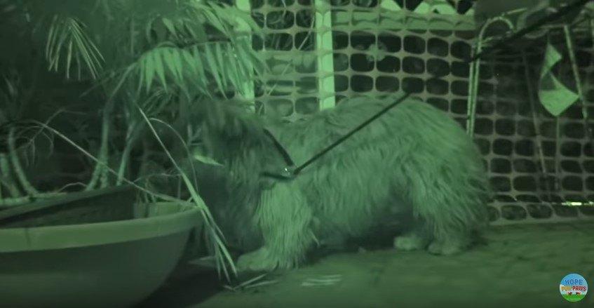 隠れようとする犬