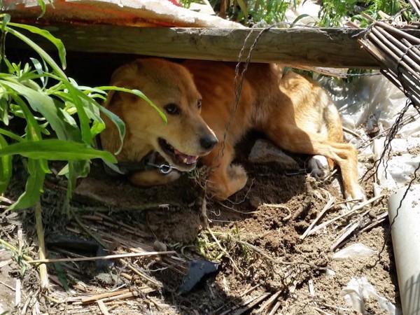 取り残された犬