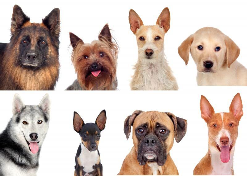 色々な犬種