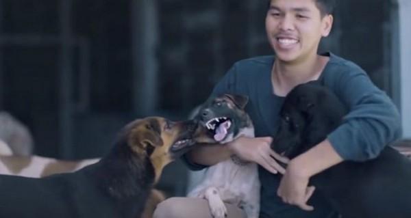 3頭の犬と男性