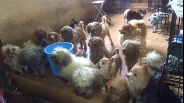 日本の多頭飼育現場