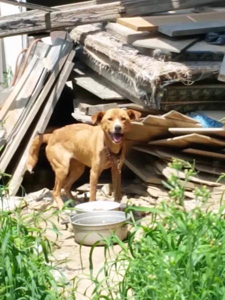 廃材の中の犬