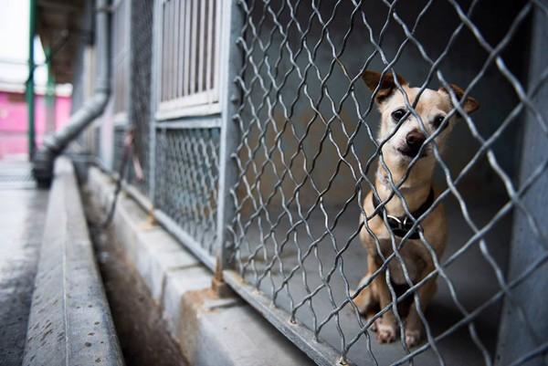 檻の中の小型犬