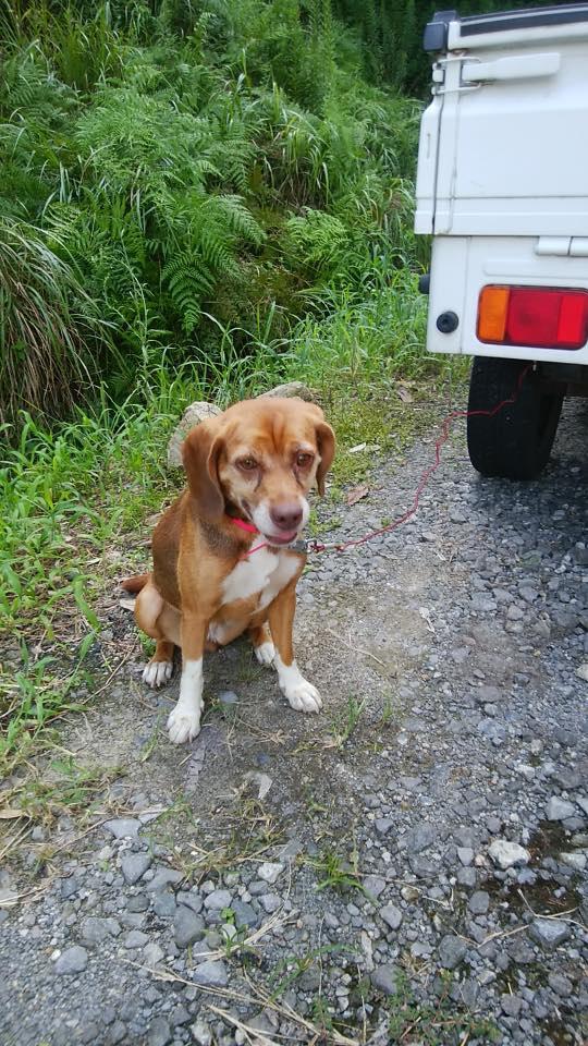 迷い犬として保護された犬