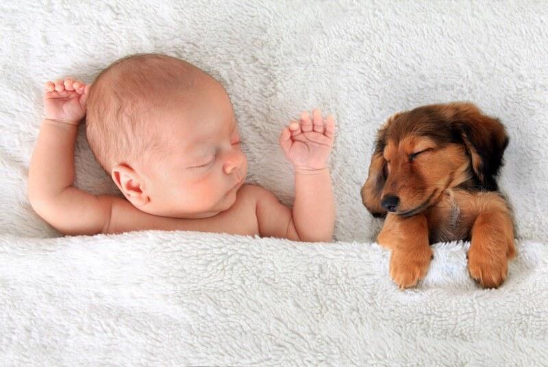 お昼寝中の犬と赤ちゃん