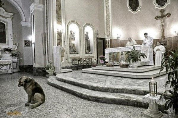 祭壇の前に座る犬