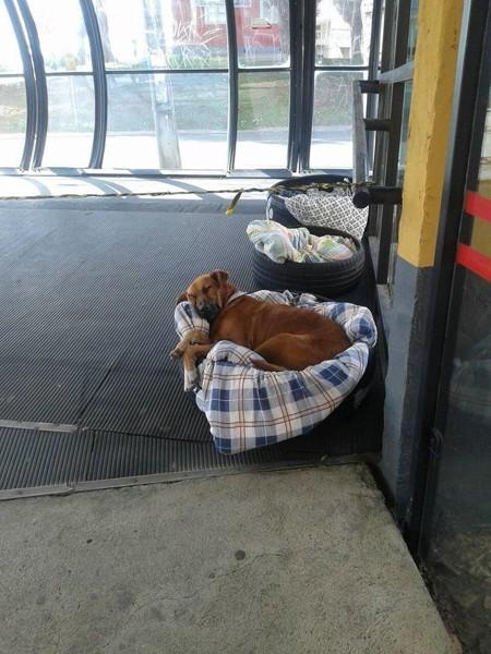 バスターミナル内でタイヤの上で寝る犬