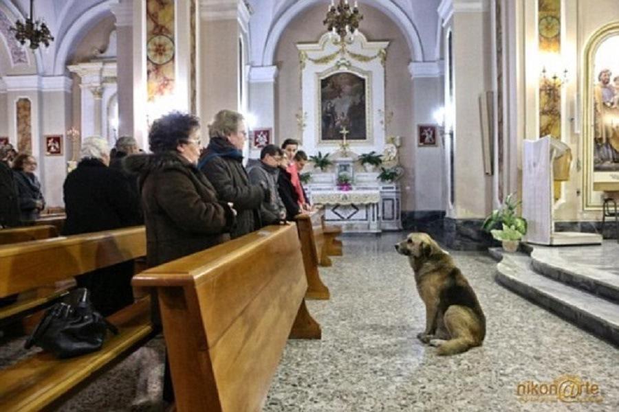 協会に座りミサに参加している人達を見ている犬
