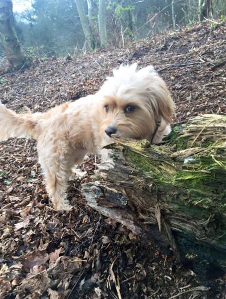 枯葉の上を散歩する犬
