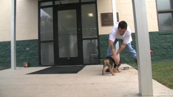 入口付近で小さな犬と遊ぶ男性