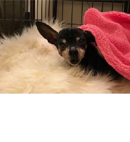 ピンクの毛布と犬