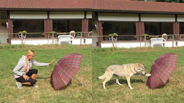 女性と傘と犬