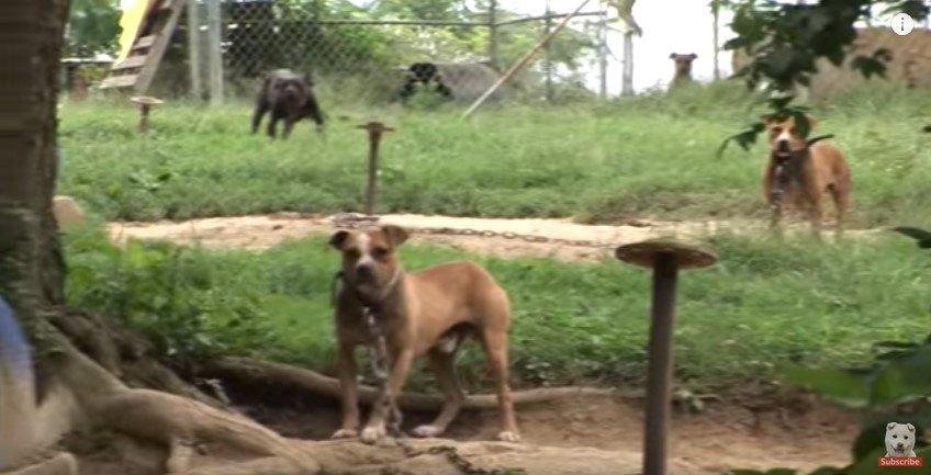 敷地内の犬たち