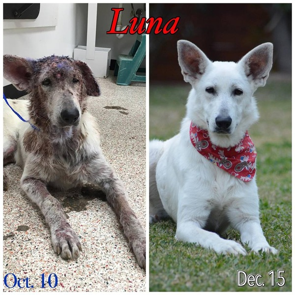 ルナの治療前と治療後