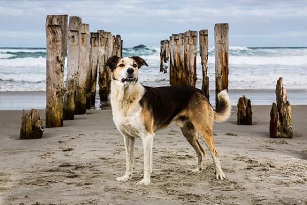 海岸の杭の前に立つ犬