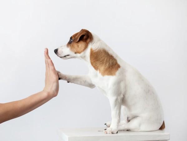 人と手を合わせる犬