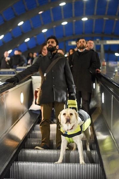 エスカレーターに乗る盲導犬と男性