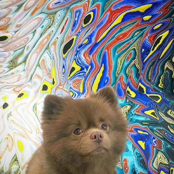 マーブル模様の絵の前にいる犬
